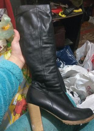 Шикарные женские зимние сапоги на каблуке