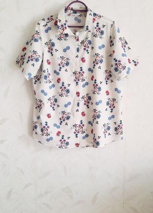 Нежная рубашка, блуза из хлопка и полиэстера от cotton traders