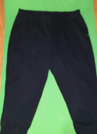 Бриджи, шорты, 54-56 размер