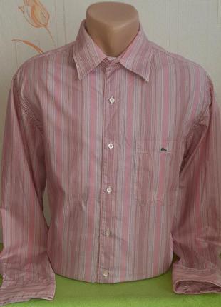 Розовая рубашка в разноцветную полоску lacoste,💯 оригинал, молниеносная отправка
