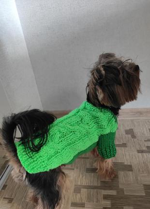 Красивый тëплый яркий зëленый яркий неоновый свитер  кофтадля мелких собак чихуахуа йорк той-терьер