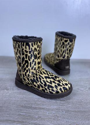 Стильные леопардовые угги,  ugg,