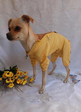 🍁🐾 комбинезон🌦🐕плащик дождевик куртка ветровка для маленькой собачки
