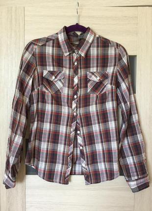 Рубашка, хлопок, terranova, s/m