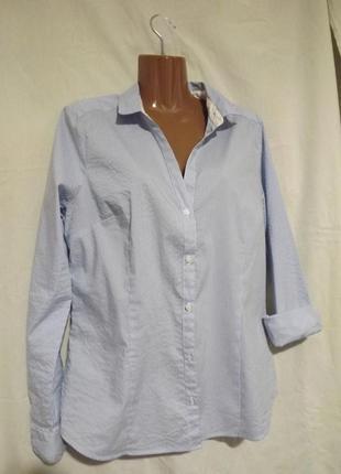 Рубашка в мелкую бело-голубую полоску