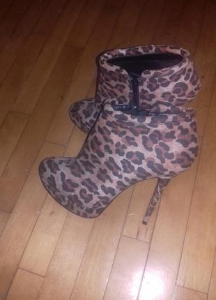 Леопардові черевички