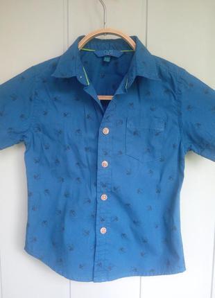 Летняя рубашка в дельфинчики