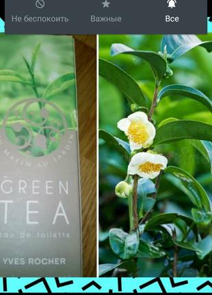 Оригинал! низкая цена! туалетная вода зеленый чай 100 мл yves rocher