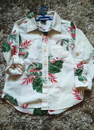 Хіт сезону-сорочка з принтом монстери
