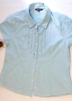 Светлая блуза в мелкую полоску рубашка debenhams большой размер
