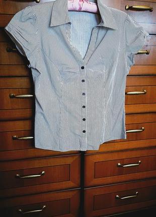 Рубашка блуза в мелкую полоску
