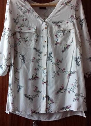 Блуза f&f , рубашка птички