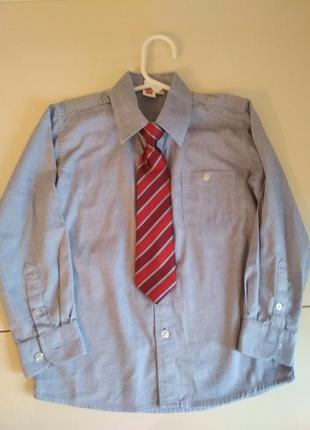 Хлопковая рубашка cool club р.116 +галстук