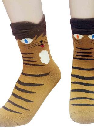 Носки – корея -  оригинальные кошки