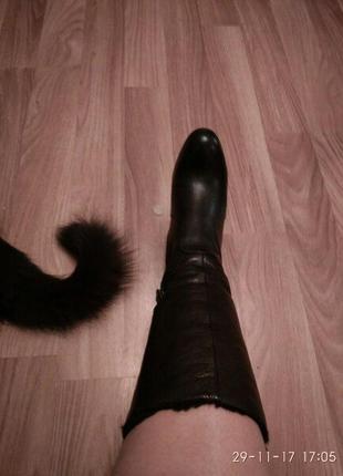 Зимние кожаные сапоги сarlo рazolini (оригинал)2 фото