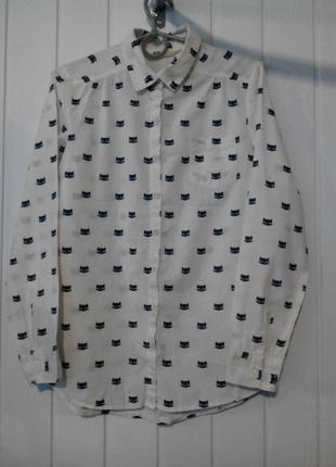 Классная рубашка блузка маленького размера с котиками