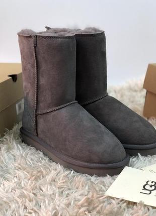 Оригинальные женские сапожки ugg australia classic short zip - grey
