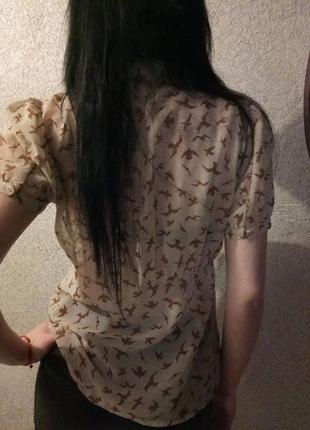 Брендовая блузка принт ласточки forever 213 фото