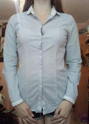 Рубашка в мелкую полоску2