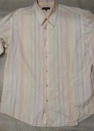 Рубашка белая в цветные полоски ted baker