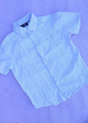 Рубашка рубашечка h&m 5-6 лет 116 см1 фото