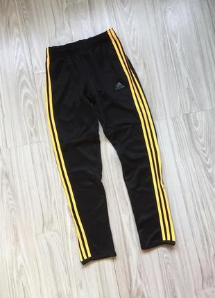 Идеальные спортивные штаны  adidas climalite