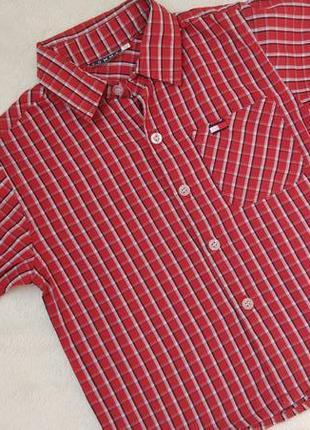 Новая трендовая рубашка tommy на 3-5 лет
