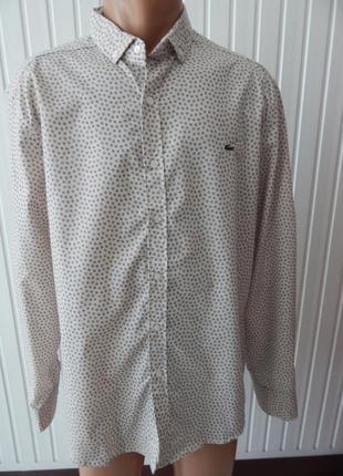 Мужская кофейная рубашка lacoste
