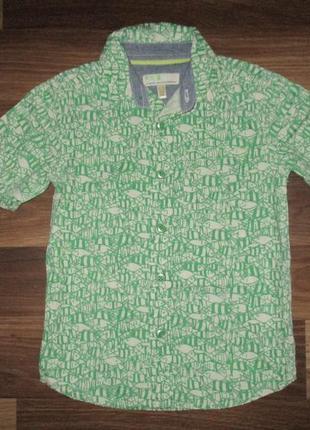 Котоновая зеленая рубашечка в рыбки фирмы bhs на 4-5 лет