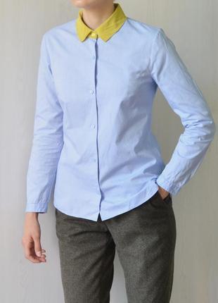 Хлопковая блуза голубого цвета с шёлковым воротничком carven