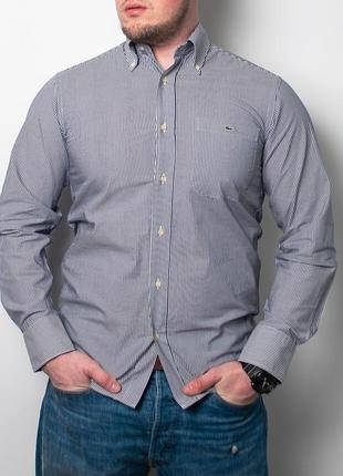 Lacoste мужская рубашка