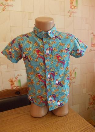 Рубашка 3-4 года, 104 см, rebel, коттон