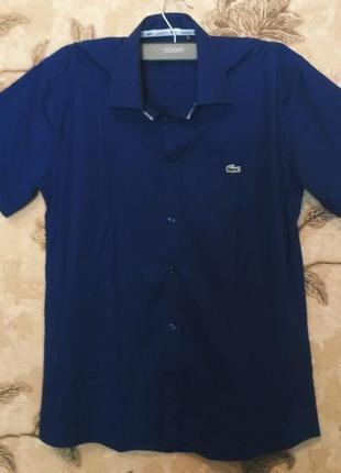 Фирменная рубашка lacoste, оригинал