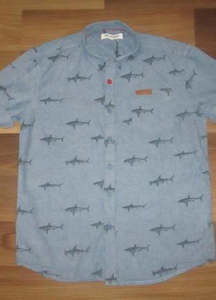 Хорошенькая рубашечка в акулки фирмы ben sherman на 10-11 лет