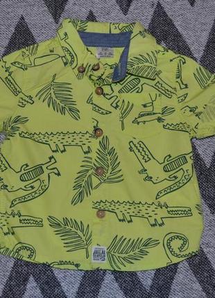 Новая яркая и красивая рубашечка для маленького модника