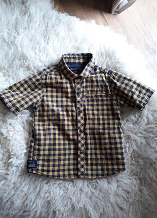 На хлопчика дитяча рубашка next